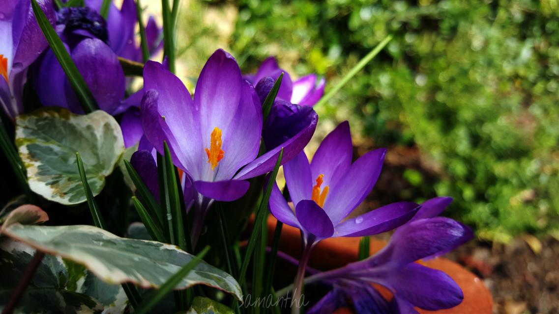#nature #photography #flower #garden #work #purple