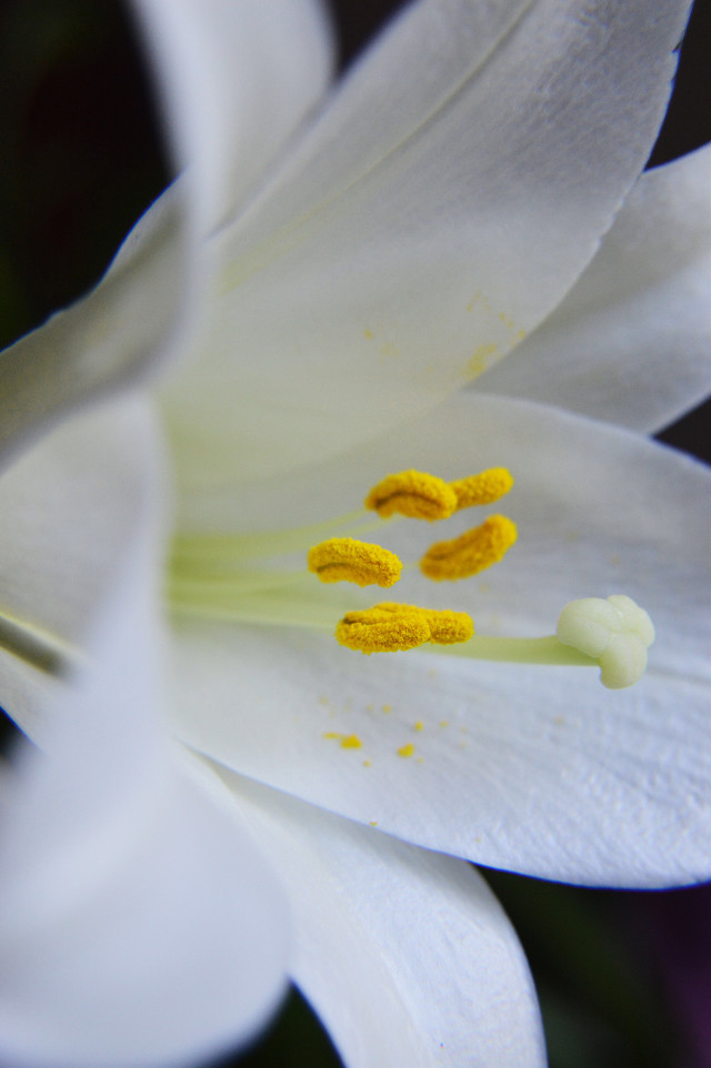 """Spring is nature's way of saying, """" Let's party!"""" 😜😂 #interesting #art #beach #birthday #california #italy #japan #france #wedding #nature #music #party #night #snow #travel #london #people #sea #sky #photography #summer #flower #flowers #closeup #close #up #white #yellow #color #colors #college #collage #flowerpower #nature #beauty #naturephotography #traveling #traveler #discover #explorer #south #northamerica #usa #idaho #washington #pnw #nikon #photographer #photooftheday #earlymorning"""