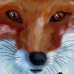 wdpzooanimals fox petsandanimals
