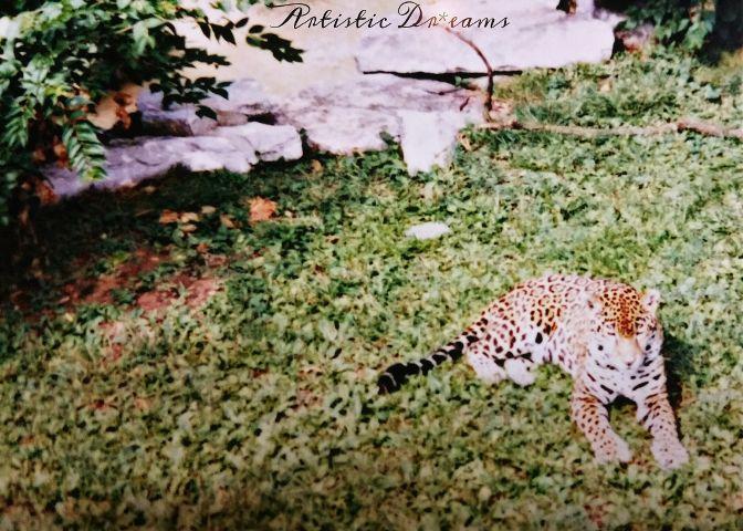 wppzoo zoo petsandanimals cats wildlife