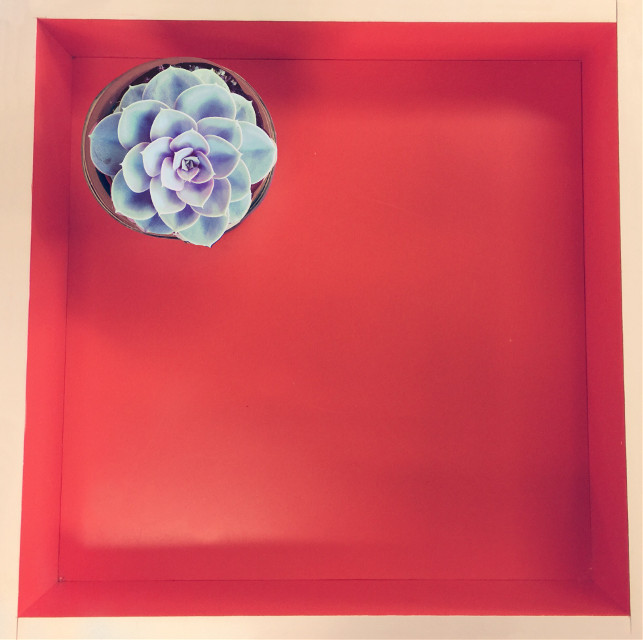 #FreeToEdit #flower #minimalism
