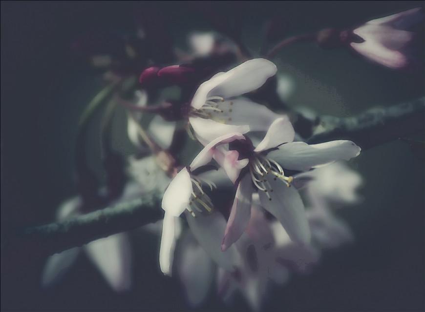 Subtly Comic #ComicEffect #dailyinspiration #nature #Flower #bloom  #blossom #macro #closeup #popart #springtime #photography  #artistic