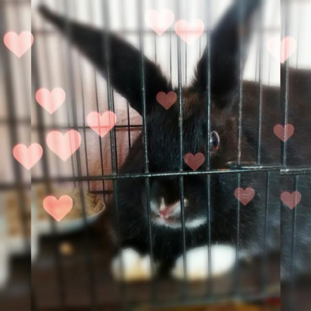 My rabbit 🐰💜