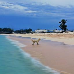 inmotion photography vibranteffect dog beach
