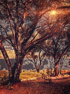 freetoedit trees oaks nature neoneffect