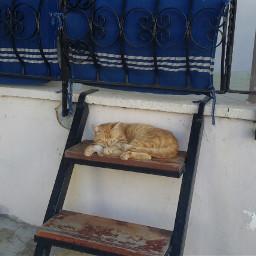 cat petsandanimals yellow