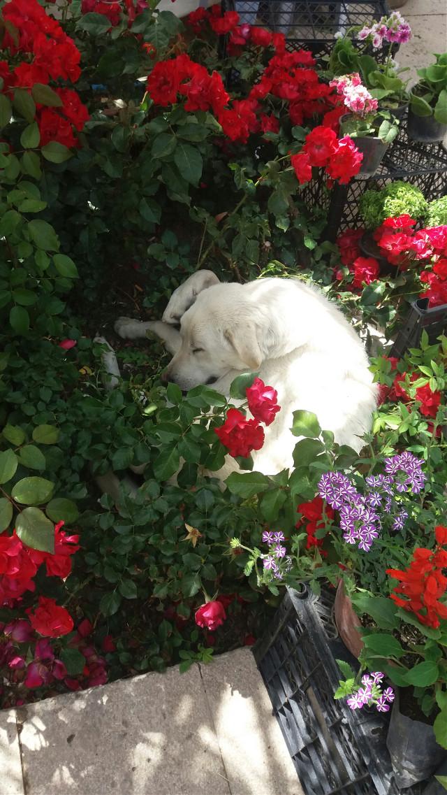 #dog #flower