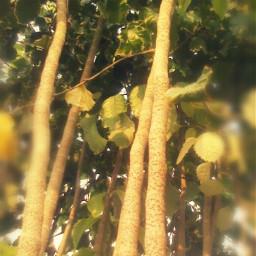 macro nature photography tree freetoedit