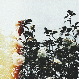 film films canon white flowers freetoedit