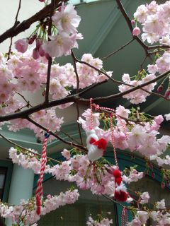 photography colour intetessting japan sakura