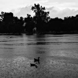 rainyday california lake dropsofrain picsart freetoedit