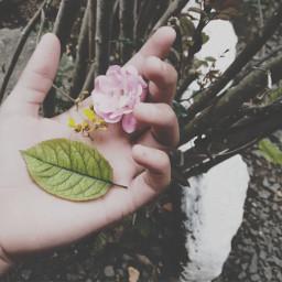 hand flower nature