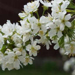 nature nofilter flower tiltshift freetoedit