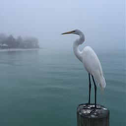 wppvacation florida egret pier fog