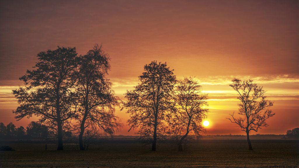 Tree evolution 2016 #Netherlands #DramaEffect #DodgerEffect #Nature #Tree #sunrise #landscape #greengrassofhome #Orange #wakeup #DailyInspiration #colorsplash