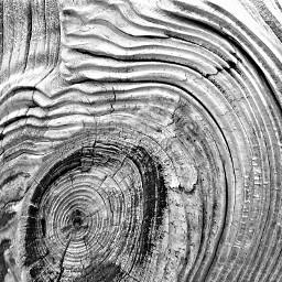texture blackandwhite nature wood weathered