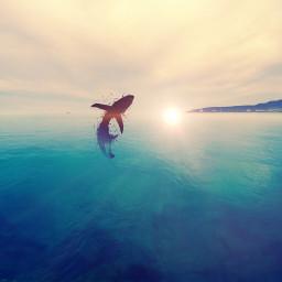 freetoedit sea shark sunshine artistc