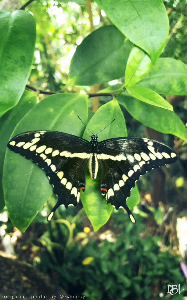 #nature #colorful #butterfly #moodygardens  #wings  #green #plants  #beauty