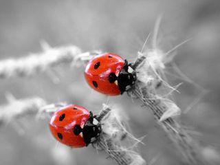 clone paphotochallenge ladybug macro photography freetoedit