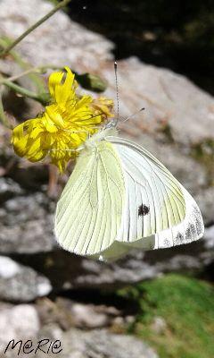 nature butterfly summer