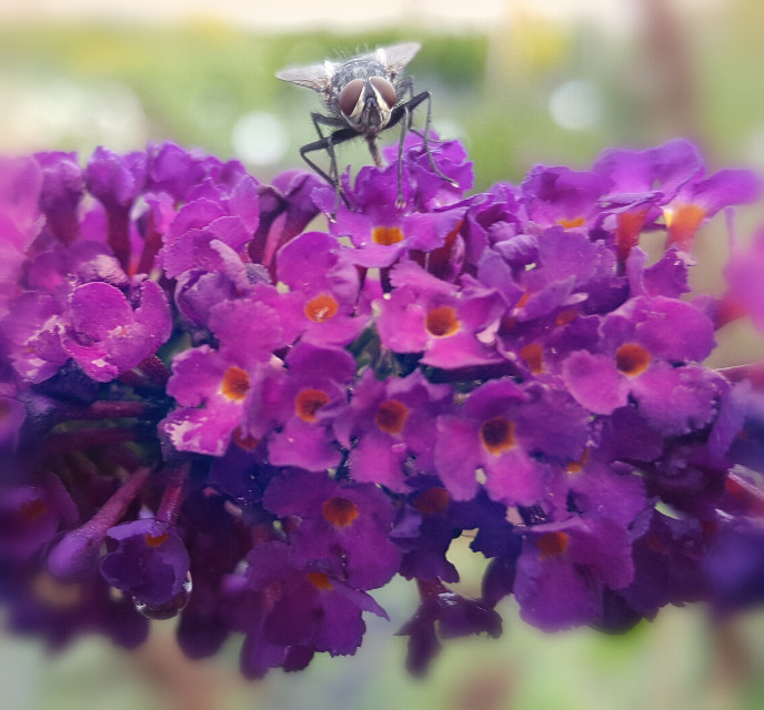 #nature #naturephotography  #mygardenflower  #naturesbeauty  #mygarden