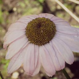 photography nature flower pink cinerama