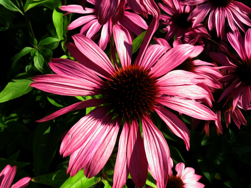 #photography #nature #flowers #pink  #oilpainting