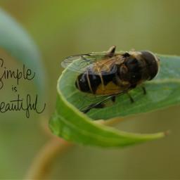 bee petsandanimalslove nature myphotography myinspiration
