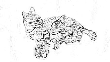 sketchereffect cats catsofpicsart catsphotography kittens