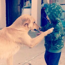ilovedogs