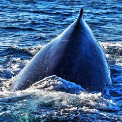whale fattaleffect