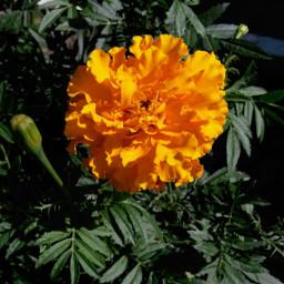 flower freetoedit colorful foto