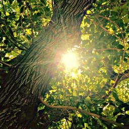 nature sky sun beautifuldayoutside photography freetoedit