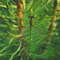 petsandanimals nature mygarden closeup insect