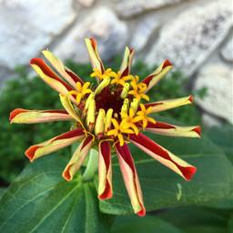 frommygarden flower